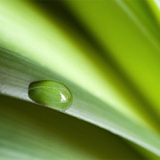 Schadstoffe ade: Pflanzen zur Raumluftverbesserung
