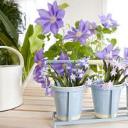 Zimmerpflanzen gießen: Allgemeine Regeln gibt es nicht