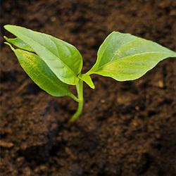 Zimmerpflanzen vermehren