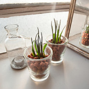 Hydrokultur für Zimmerpflanzen – pflanzen ohne Erde