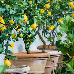 Zimmerpflanzen für Wintergarten