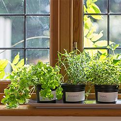 pflanzen f r die k che zimmerpflanzen f r die k che. Black Bedroom Furniture Sets. Home Design Ideas