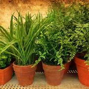 Die passenden Blumentöpfe für Zimmerpflanzen