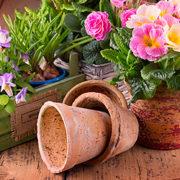 Blumen umtopfen – ab und an ein paar neue Schuhe