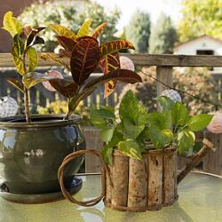 zimmerpflanzen auf dem balkon tipps f r zimmerpflanzen. Black Bedroom Furniture Sets. Home Design Ideas