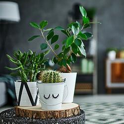 Grüner Daumen bei Zimmerpflanzen