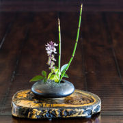 Ikebana – Wo ein Kadoka mit Shin, Soë und Hikaë arbeitet