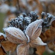 Zimmerpflanzen in der kalten Jahreszeit: Pflegetipps für den Winter