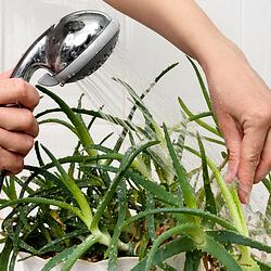 zimmerpflanzen pflege tipps zur pflege der topfpflanzen. Black Bedroom Furniture Sets. Home Design Ideas