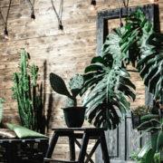 Zimmerpflanzen – wie wichtig der richtige Standort ist