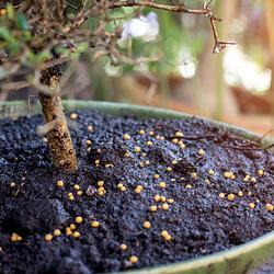 Dünger für Zimmerpflanzen