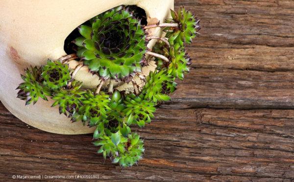 Ableger von Zimmerpflanzen: eins, zwei, viele