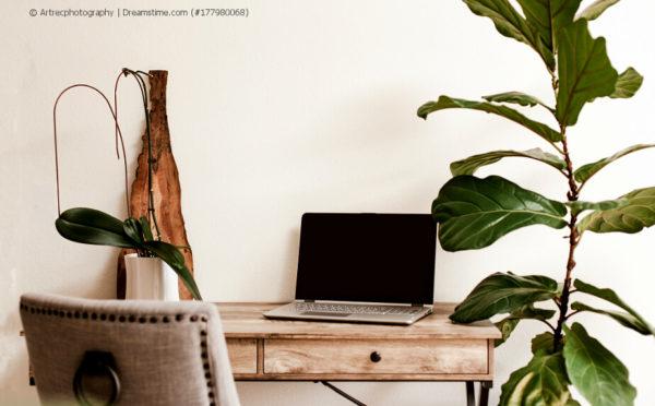 Büropflanzen – farbliche Abwechslung bei der Arbeit