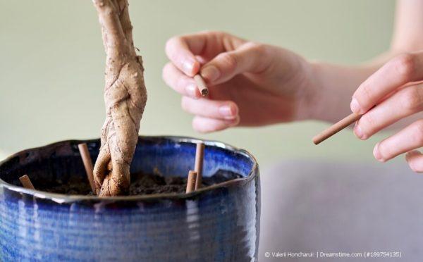 Dünger für Zimmerpflanzen: Nährstoffe für üppiges Grün
