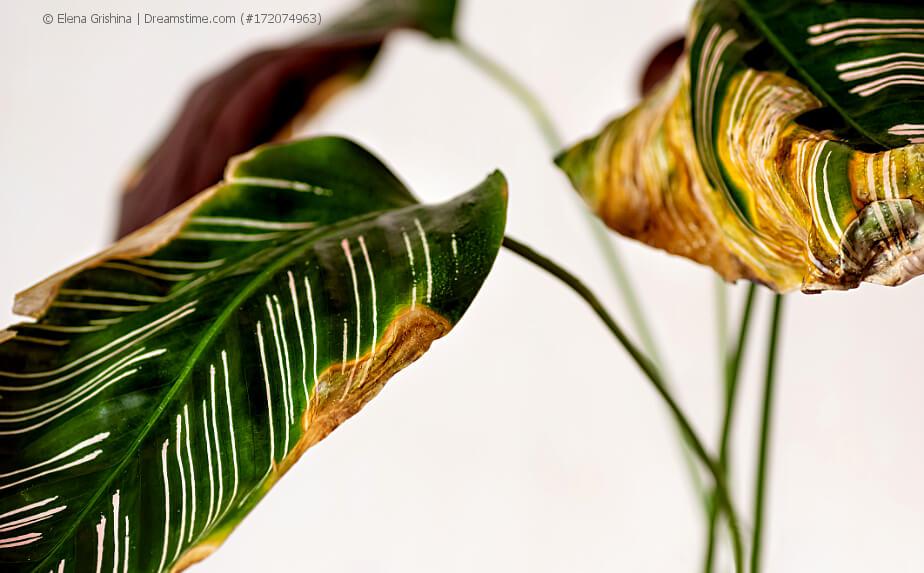 Krankheiten an Zimmerpflanzen