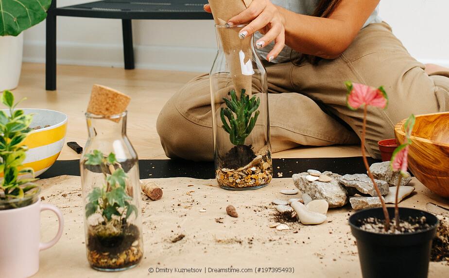 Pflanzen in Flaschen