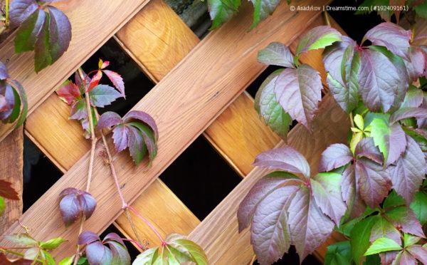 Rankgitter für Zimmerpflanzen: wenn´s hoch hinaus geht