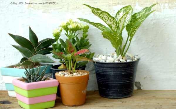 Tipps zur Pflege der Zimmerpflanzen