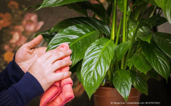 Frühjahrskur für Zimmerpflanzen