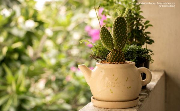 Ab nach draußen: Zimmerpflanzen auf dem Balkon
