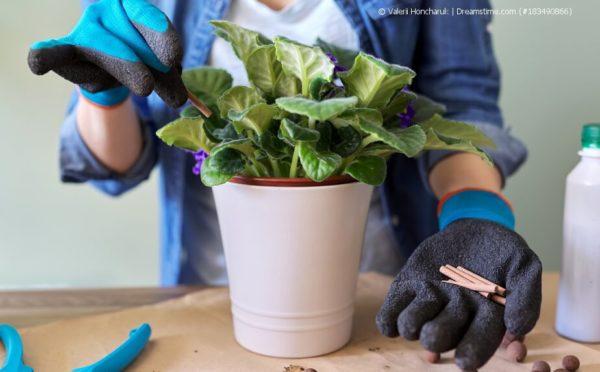 Zimmerpflanzen düngen: Vitamine für die Blumen