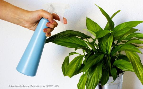 Zimmerpflanzen-Pflege:  Auch Blumen brauchen mal Wellness