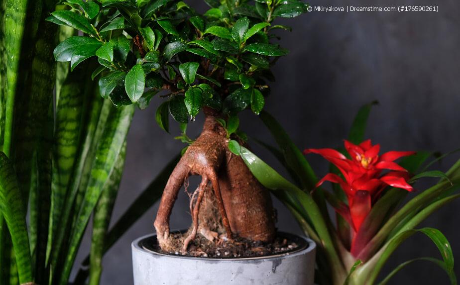 Zimmerpflanzen - To do´s im Spätsommer